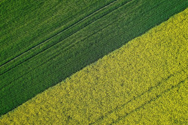 A beautiful agricultural half green half yellow grass field shot with a drone
